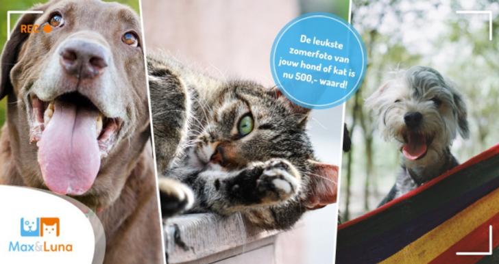 De leukste zomerfoto van jouw hond of kat is € 500 waard!