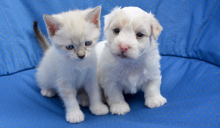 Gratis puppy- of kittenpakket
