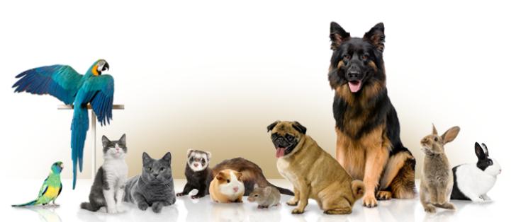Gratis huisdieren waardebon