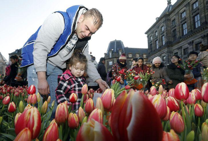 gratis tulpen plukken