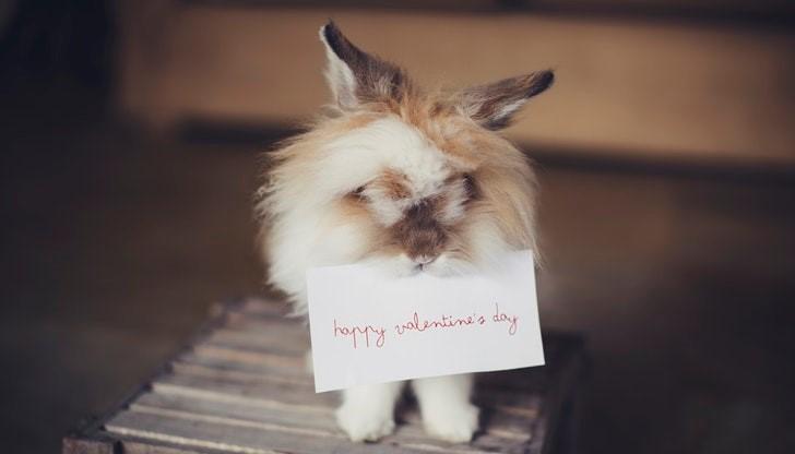 Gratis valentijnskaartje sturen