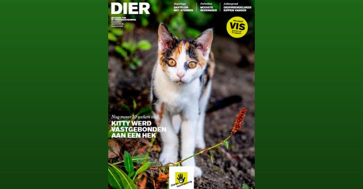 dier magazine