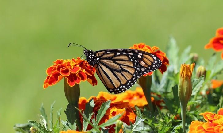 bloemenzaadjes vlinders