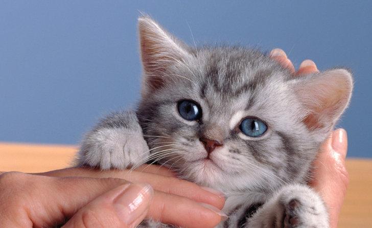 Verwen je kitten met Whiskas