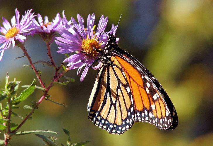 Tuinieren voor Vlinders boekje