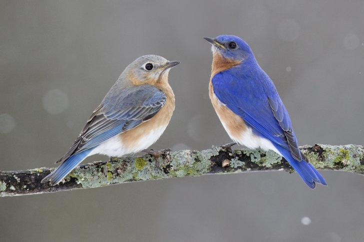 Vogels dichterbij