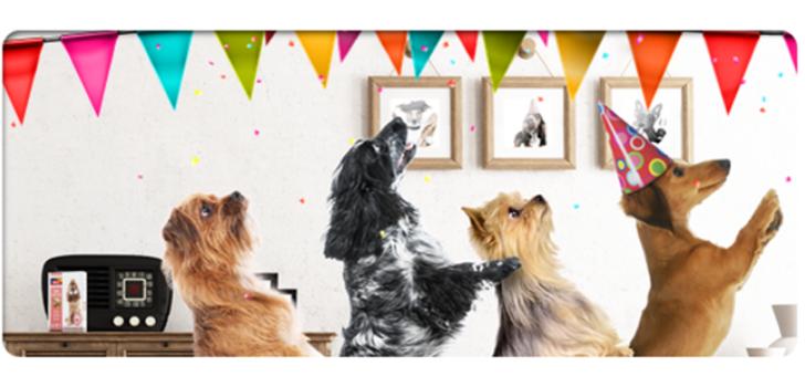 Hond verjaardag